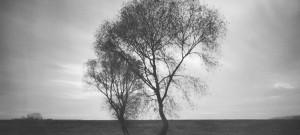 Un árbol en un día aoscuro